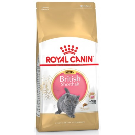 ROYAL CANIN CAT British Shorthair Kitten